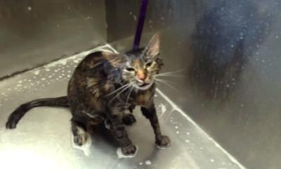 cat no more bath viral david savage