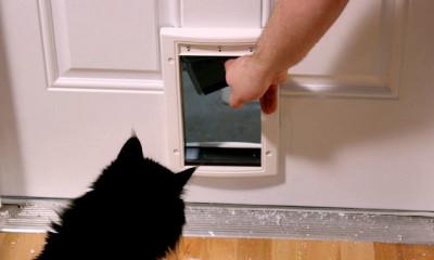 cat opening door knob viral