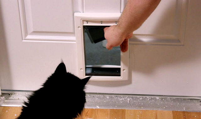 cat opening door knob viral