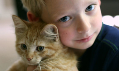 kid viral kittens organized boy cute