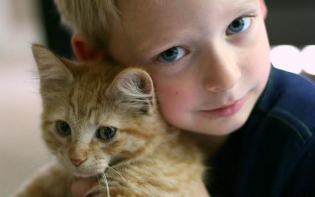 kid viral kittens organized boy cute