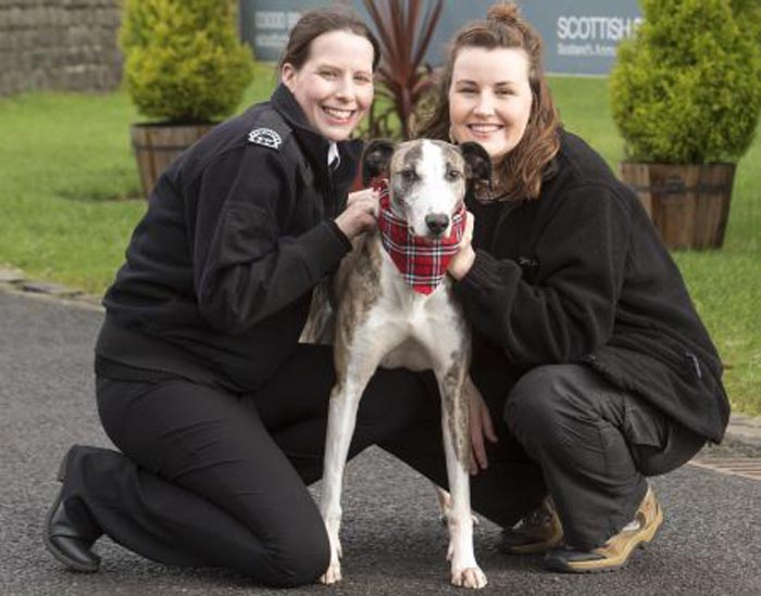 ScottishSPCA:For details see press releasePic Peter Devlin