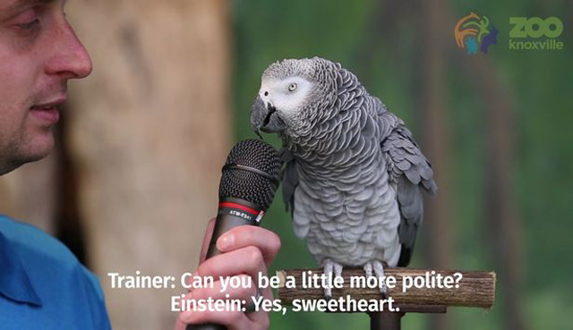 Einstein The Parrot
