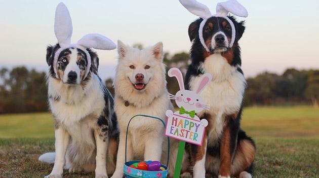 Watch Dogs Easter Egg Ctos Firewall