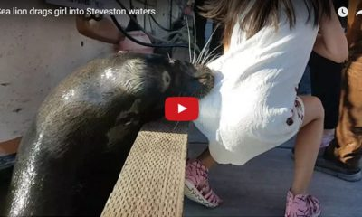 Terrifying video of sea lion pulling girl underwater