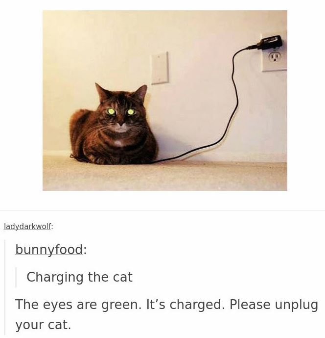cats in tumblr are crazy and cute