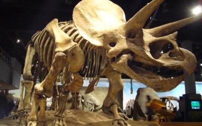 World's Most Popular Dinosaur Fossils Discovered