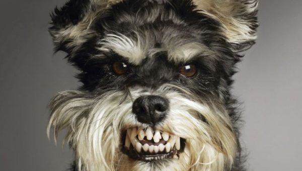 10 of the World's Most Dangerous Dog Breeds