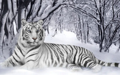 10 of the Biggest and Baddest in Wildlife