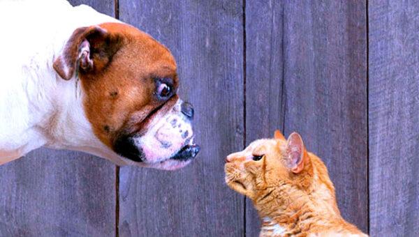 viral funny dog barks loud cat chase