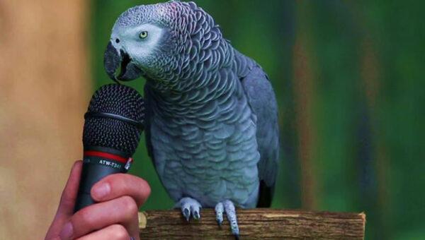 Einstein The Texan Parrot
