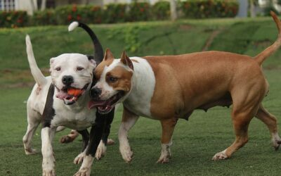 "Lawyer Puts Up ""Do Not Adopt Pitbulls"" Ad, Gets Blasted on Social Media"