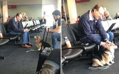 Dog Suddenly Leaves Owner at Airport, Surprisingly Comforts Grieving Stranger